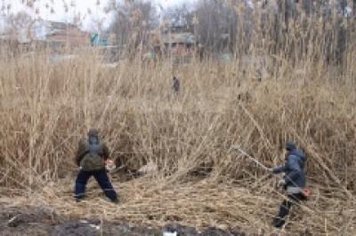 Городские водоемы очищают от зарослей камыша