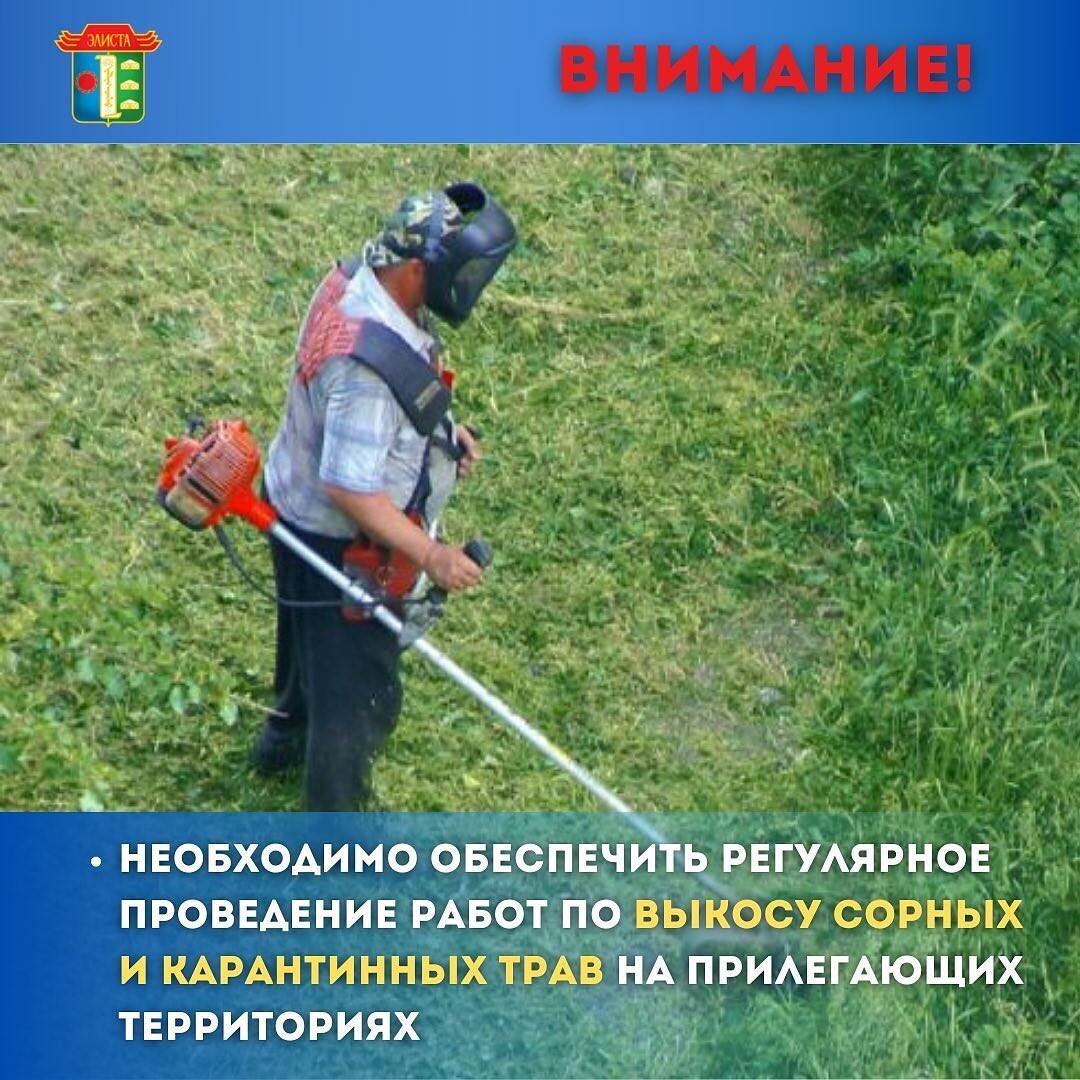 регулярное проведение работ по выкосу сорных и карантинных трав на прилегающих территориях
